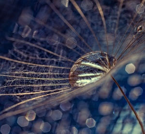 bokeh-macro-photography-by-dimitar-lazarov2